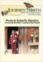 Slideshow: Monarch Butterfly Migration | Crossing Borders and Connecting People