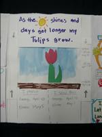 tulip_portfolio10