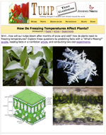 intro to plants and freezing temps