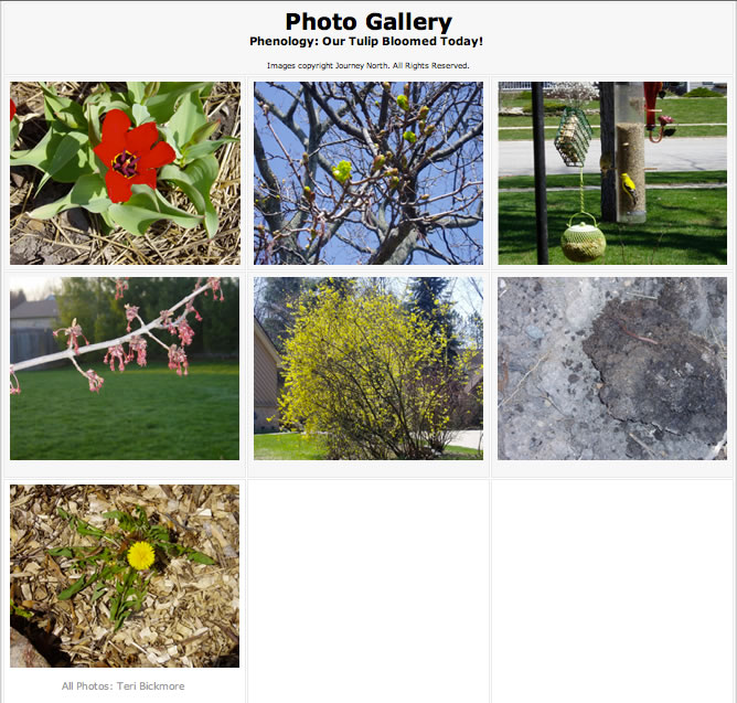 gallery of spring