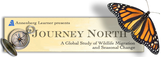 Journey North: A Global Study of Wildlife Migration and Seasonal Change