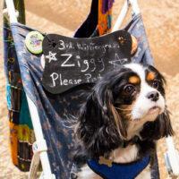 One dog petting zoo at Wintergrass 2018 - photo © Tara Linhardt