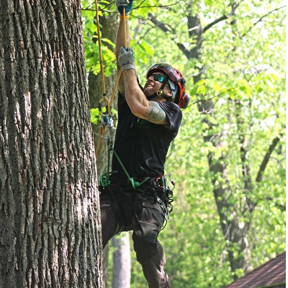 Codit Tree Care in Spirit Lake