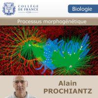 Processus morphogénétiques