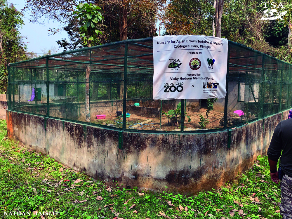 TSA India facility for Manouria emys Mountain Tortoises