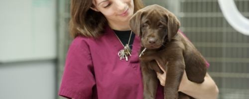 A Closer Look at Veterinary Assistant Career Path Options