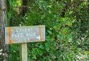 Milford MTB Trails
