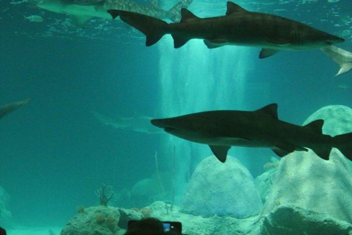 activity, adventure, aquarium, attraction, az, baby, blog, challenge, child, experience, family, first, fish tank, fun, local, mirror maze, motherhood, parenthood, personal, phoenix, scottsdale, shark gif, tour, venture