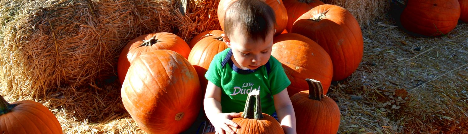 pumpkin, patch, october, autumn, fall, local, phoenix, gilbert, az, arizona, activities, fun, family, kids, season, halloween, gift, candy, carving, bouncy castle, maze, baby, first. adventure, venture, new, parents