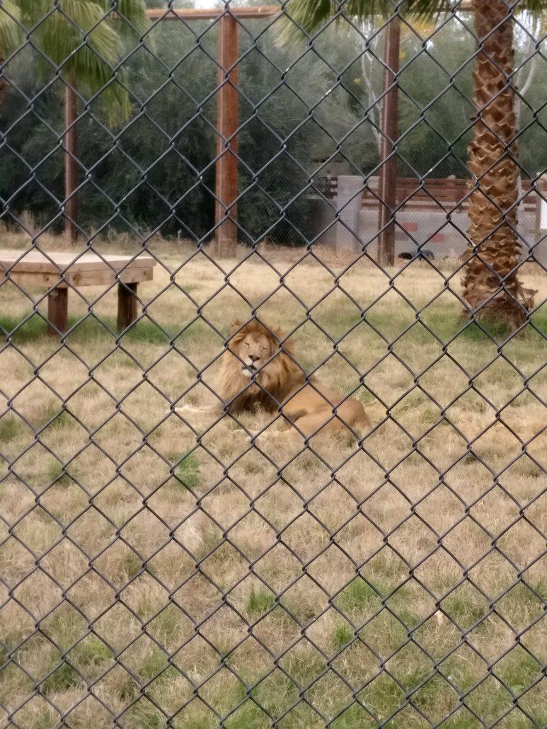 Local: Wildlife World Zoo, Aquarium, and Safari Park ...