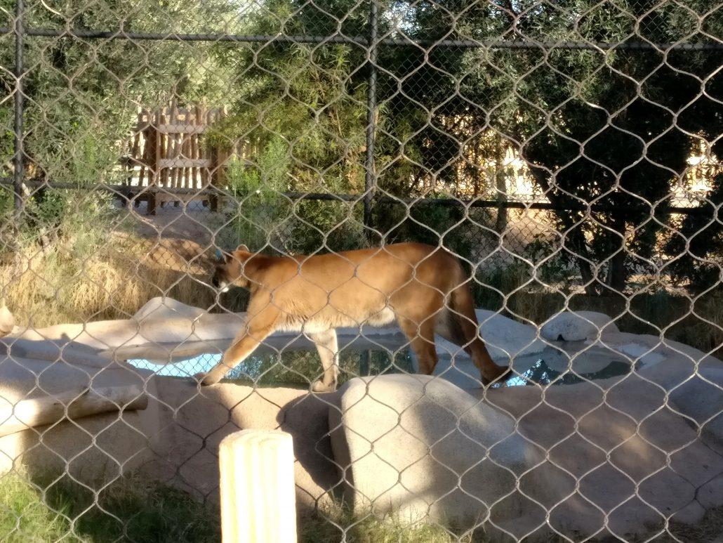 Zoo Safari Live Nature Park