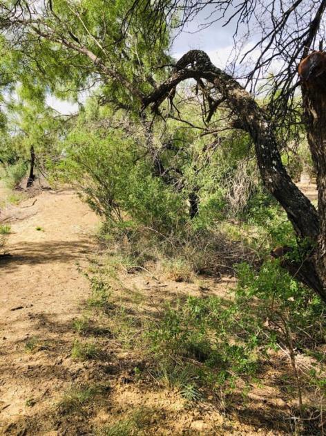 1472 Mines Road Laredo TX USA Laredo, TX 78045 - alt image 12