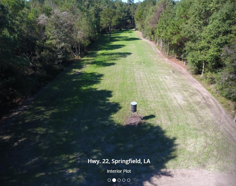 31478 Louisiana 22 Springfield, LA 70462 - alt image 2