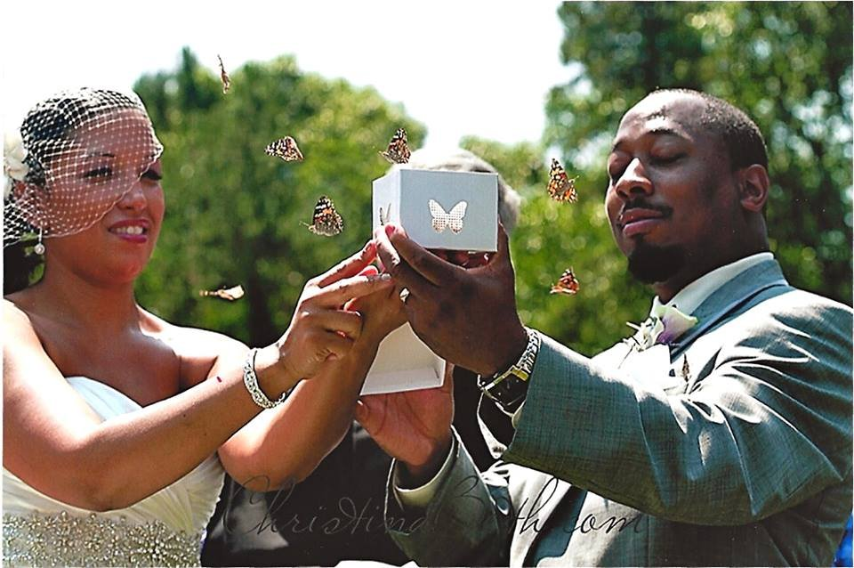cloverlawn butterflies's profile image