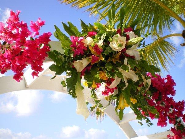 Antilles Lilies's profile image