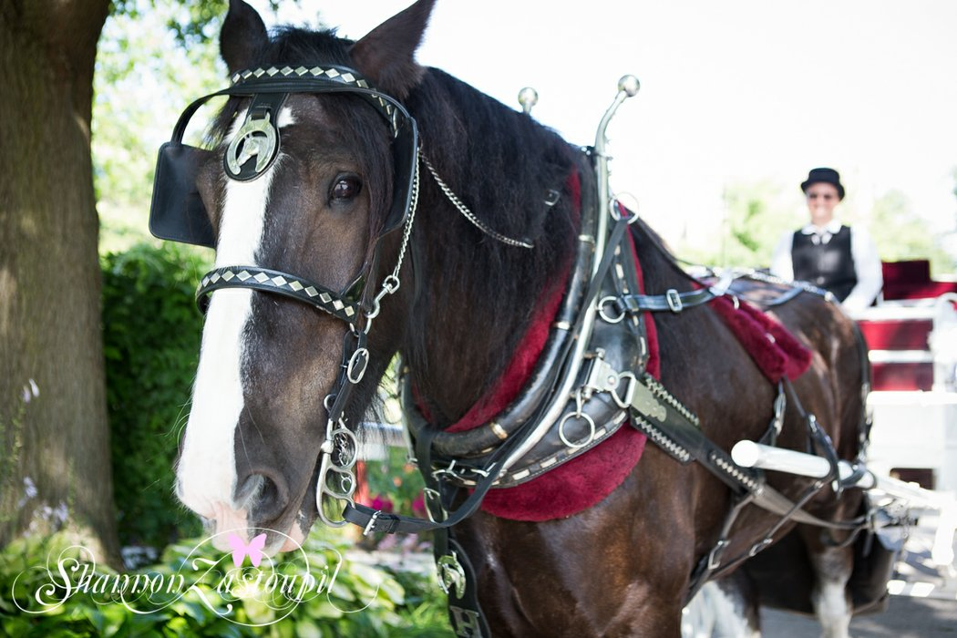 Black Tie Carriage Service's profile image