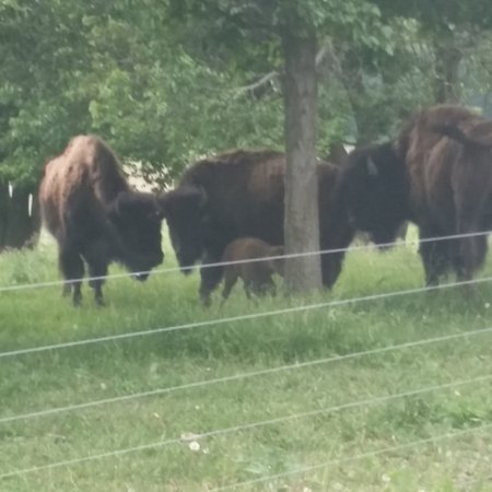 Eel River Bison Ranch