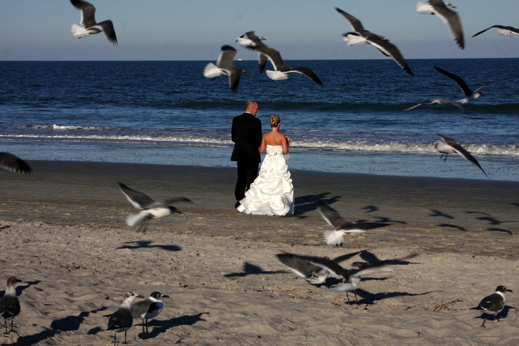Cocoa Beach Weddings on a Budget's profile image