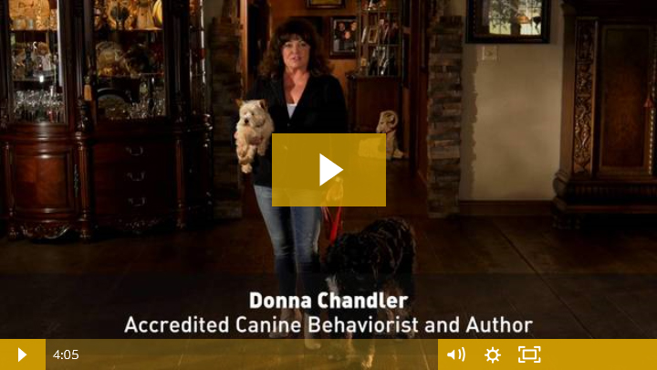 Watch Puppy & Dog Training Class Intro Video
