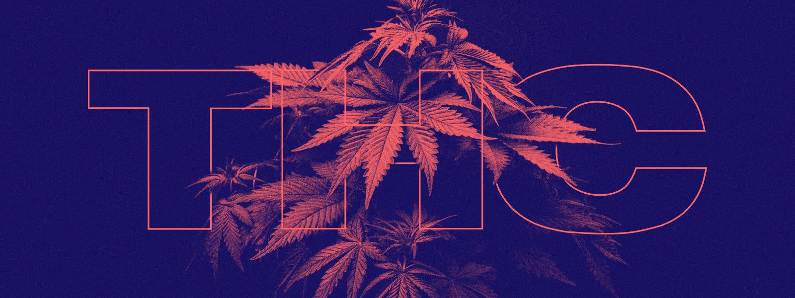 CBD and THC - Tetrahydrocannabinol Explained