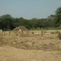 Virus: cimetière à Delhi alors que l'Inde enregistre un record de plus de 2.000 décès en 24h