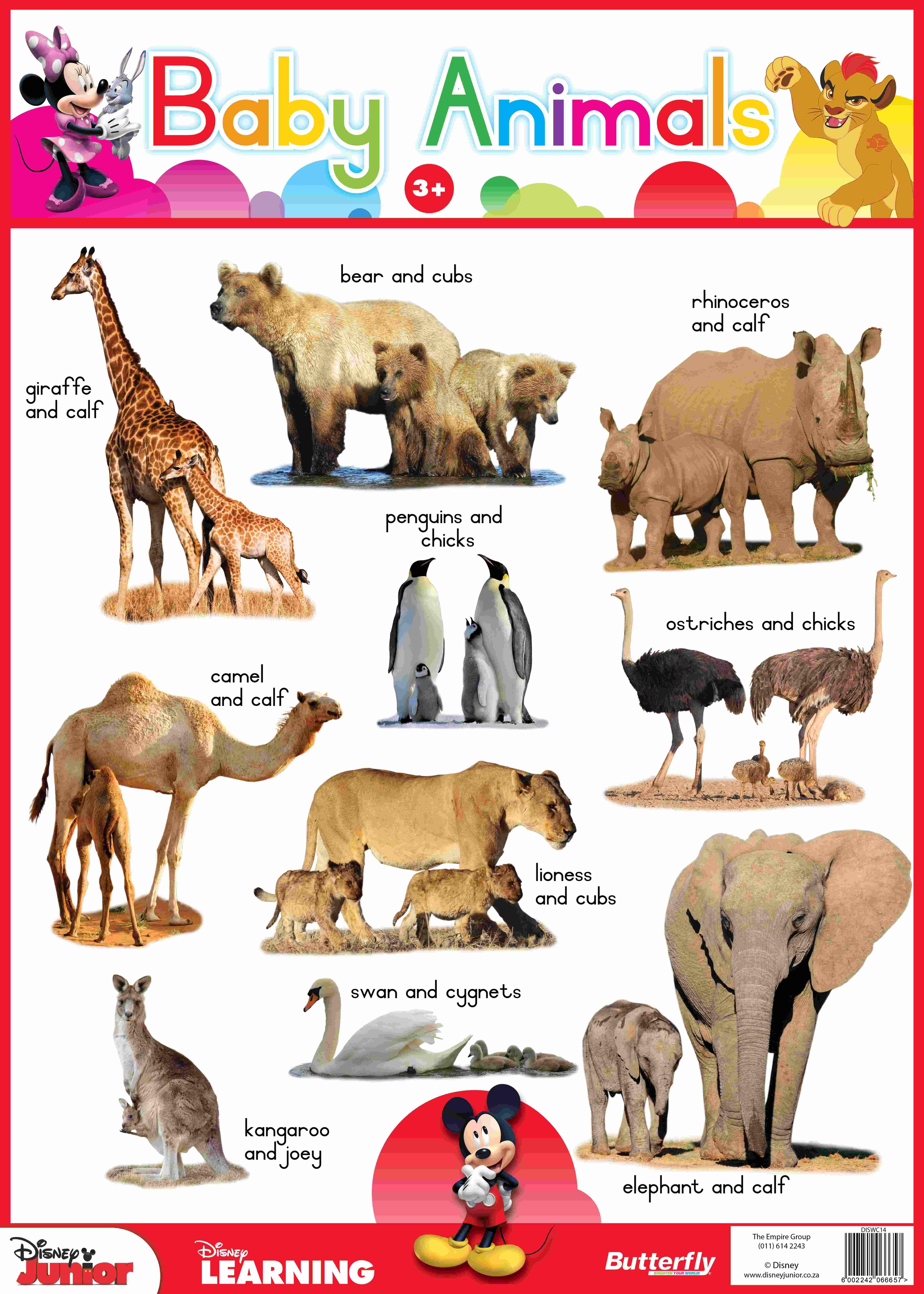 Disney Junior - Wallchart Baby Animals