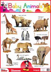Disney Junior - Wallchart Baby Animals