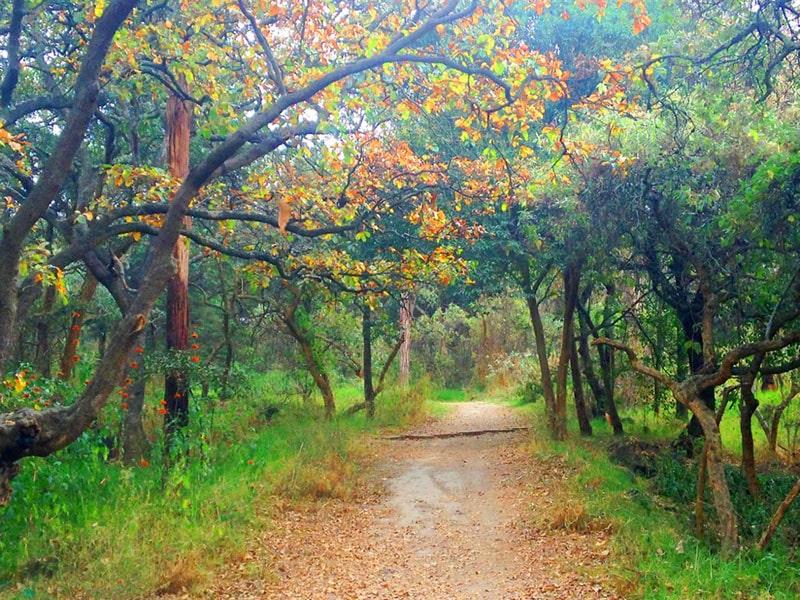 Bosque de Tlalpan CDMX