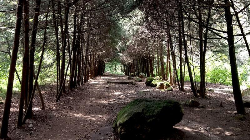 Parque Nacional los Dinamos CDMX
