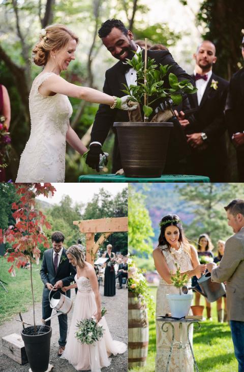 recién casados en su boda plantando un árbol en símbolo de su amor