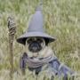 WizardDog