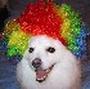 nervousdog