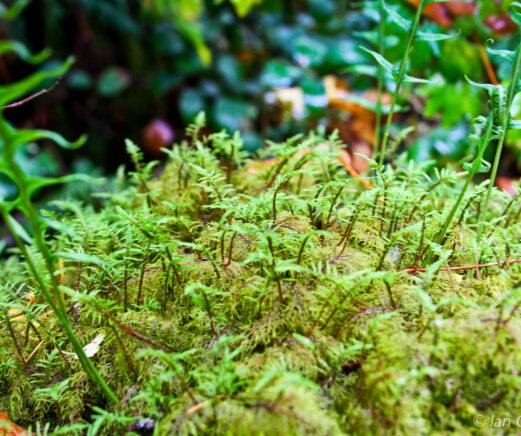 Green ferns on a mossy log.