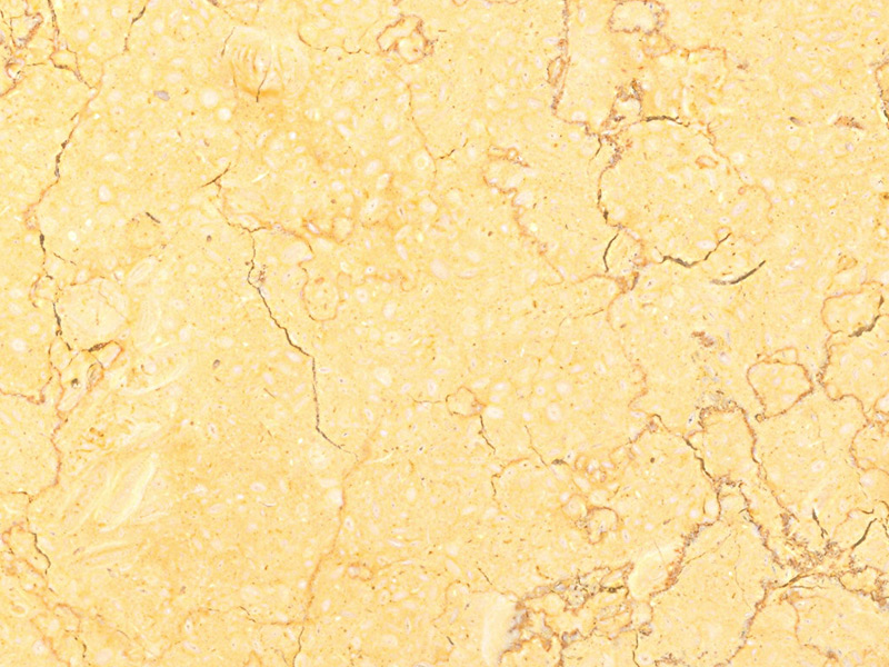 View of Marble - Champagne Gold 2cm