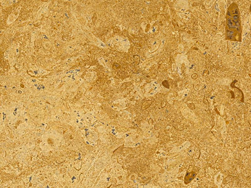 View of LimeStone - Fossil Gold Limestone 3cm
