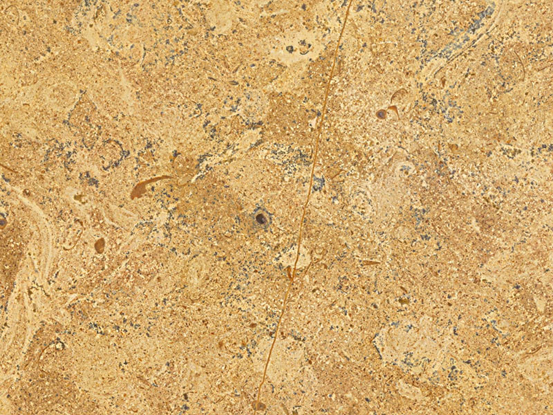 View of LimeStone - Fossil Gold Limestone Honed 3cm