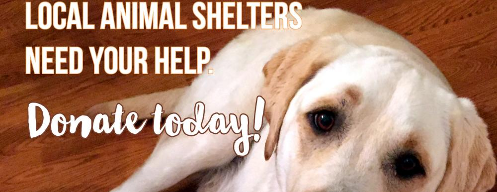 Local Shelters need your help.