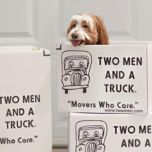 dog in two men and a truck box