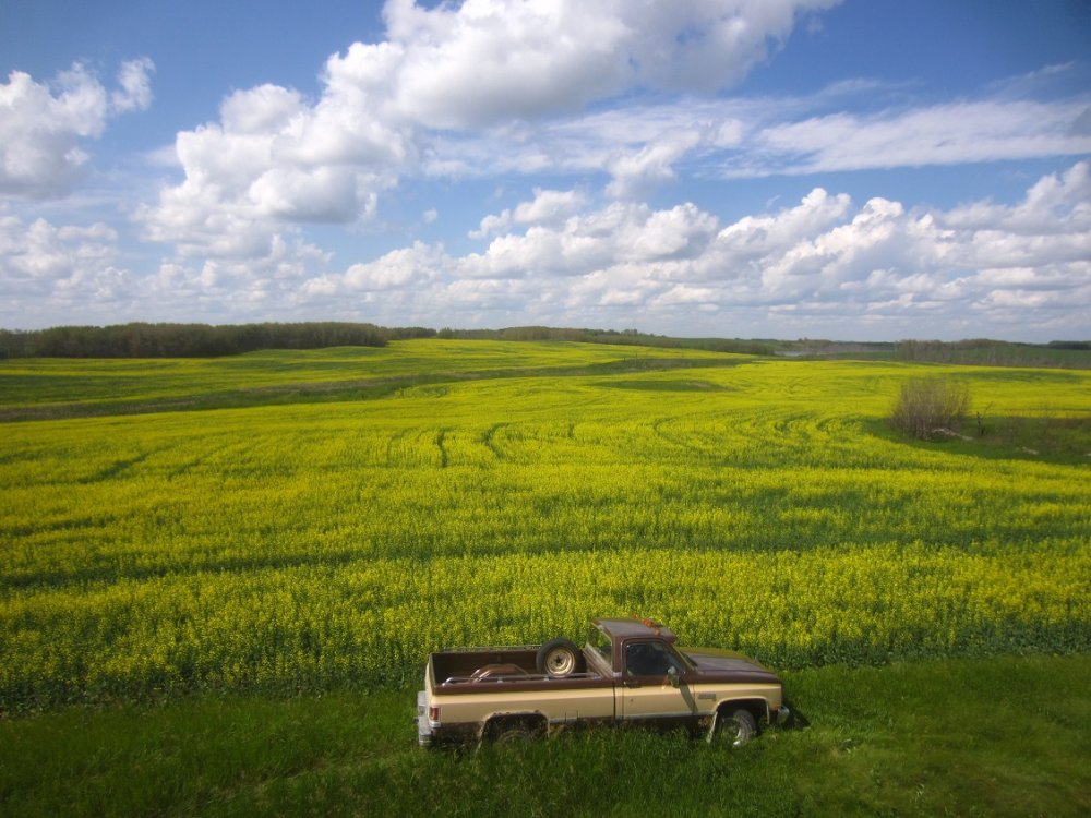 30 canola June 29.jpg