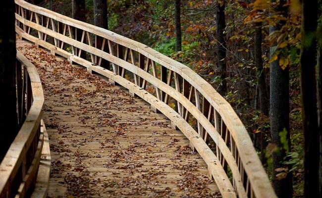 Wellness Trails Split Half