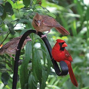 Birding 101