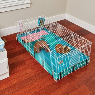 Guinea Pig Cage picture 1