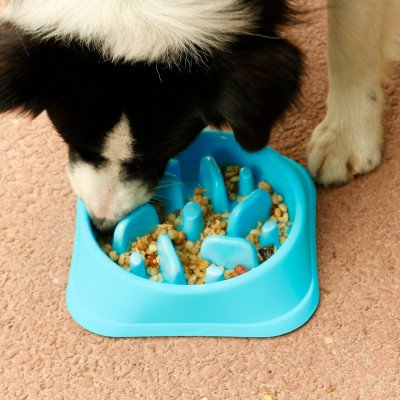 slow eating pet bowl
