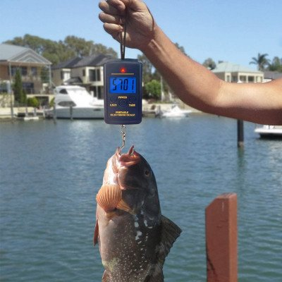 fishing scale picture 1