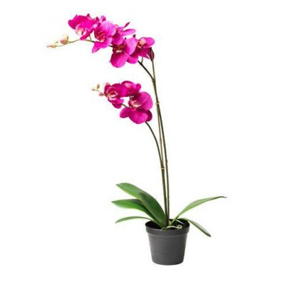 artificial potted plant, orchid dark lilac