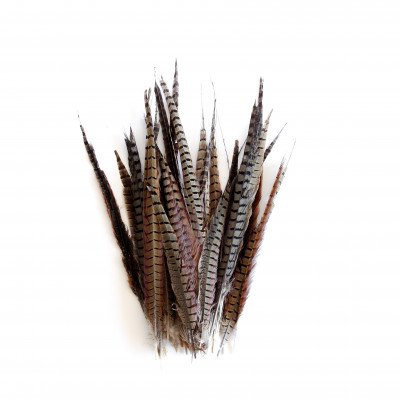 Bouquet of Pheasant Feathers picture 1