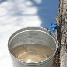 Maple syrup making kit