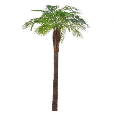 palm trees-1