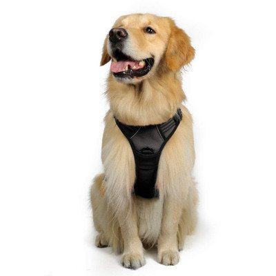no-pull pet harness-1