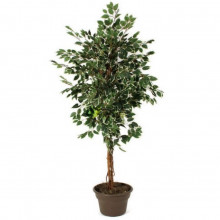 7ft Ficus artificial tree